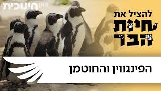 להציל את חיות הבר - הפינגווין והחוטמן