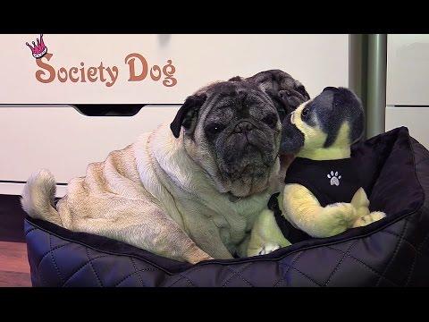 Klasse Hundeboutique - Society Dog in Berlin
