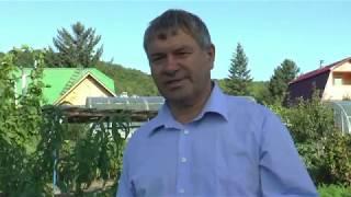 Опыт садовода Силина С. В. по выращиванию плодовых культур в стланцевой форме.