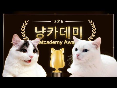 2016 냥카데미 시상식 - 꼬부기 쵸비 베스트 영상 CATCADEMY AWARDS
