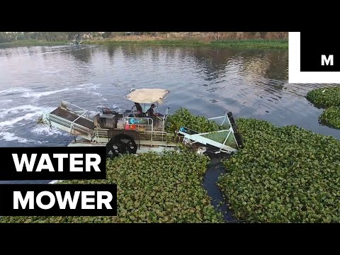 These Underwater Lawnmowers Are Making Rivers Cleaner And Healthier