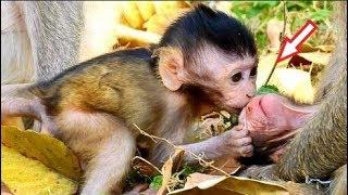 Surprise! Beautiful Baby Jilla Kiss Newborn Delena, Jilla Welcome New Member For Amari Group