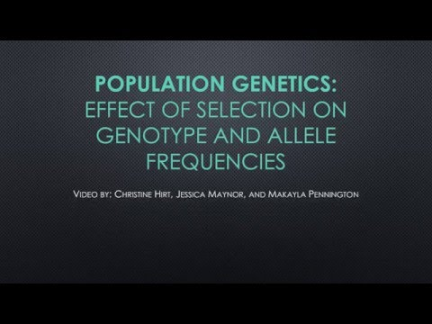 Population Genetics: Effect of Selection on Genotype and Allele Frequencies