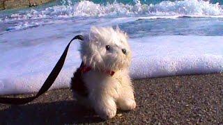Катя с собачкой на берегу Черного моря