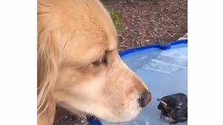 Very hopeless bird rescued |dopu hub|