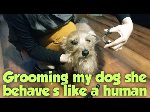 Grooming my dog | See how she behaves