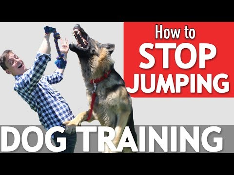 Thumbnail: Does your Dog Jump on Everyone? Here's what to Do! *NEW*