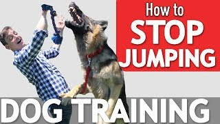 Does your Dog Jump on Everyone? Here's what to Do! *NEW*