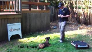 Meet Loki Of Sit Means Sit Dog Training Portland