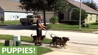 Young man uses hoverboard to walk his dogs