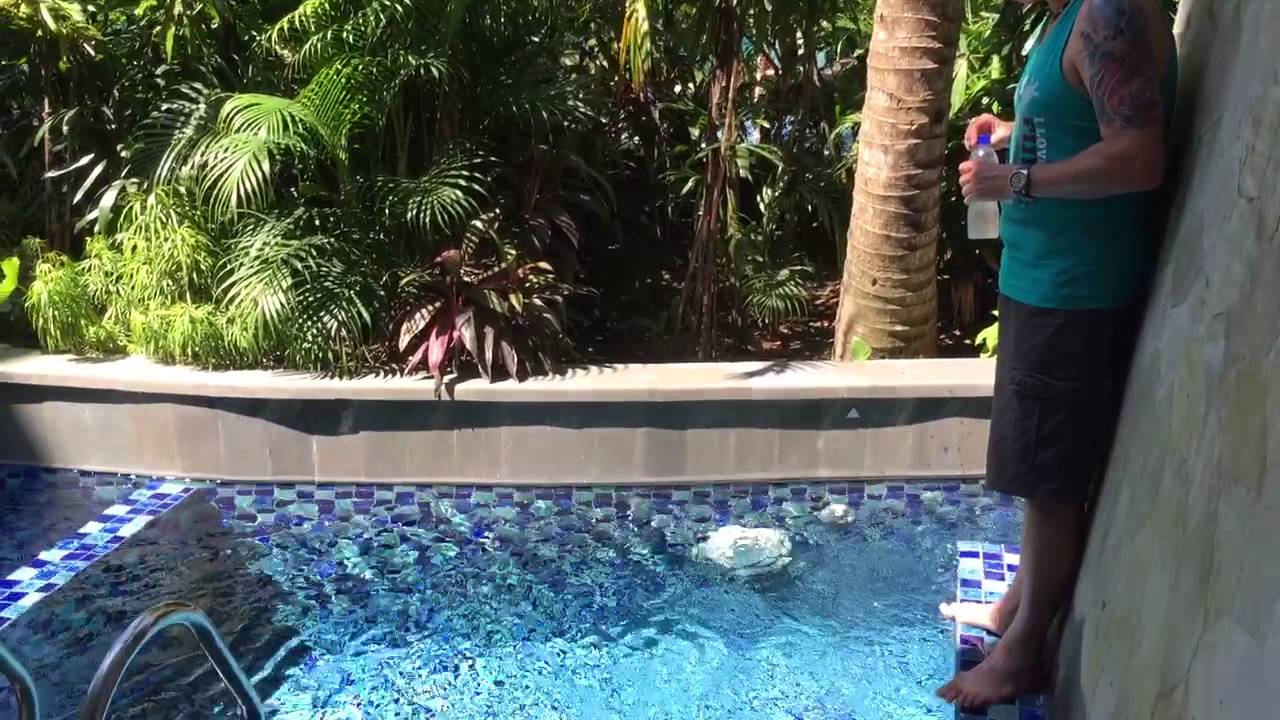 Las Vegas 94 >> Plunge pool room at Swiss Belresort Sanur Bali - YouTube