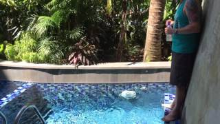 Plunge pool room at Swiss Belresort Sanur Bali