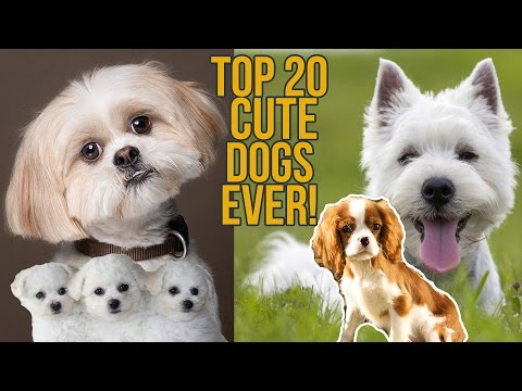 TOP 20 CUTEST DOG BREEDS EVER | CUTENESS LEVEL INFINITY