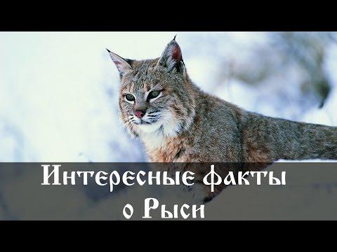 Шерлок Холмс Википедия