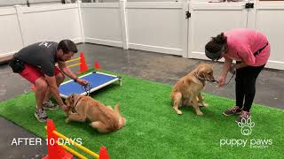 Puppy Paws Academy Promo Before and After Video