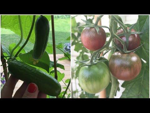 Tomat & Gurka - så lyckas du! - Carro och Karin Hemmafixarna - program 5