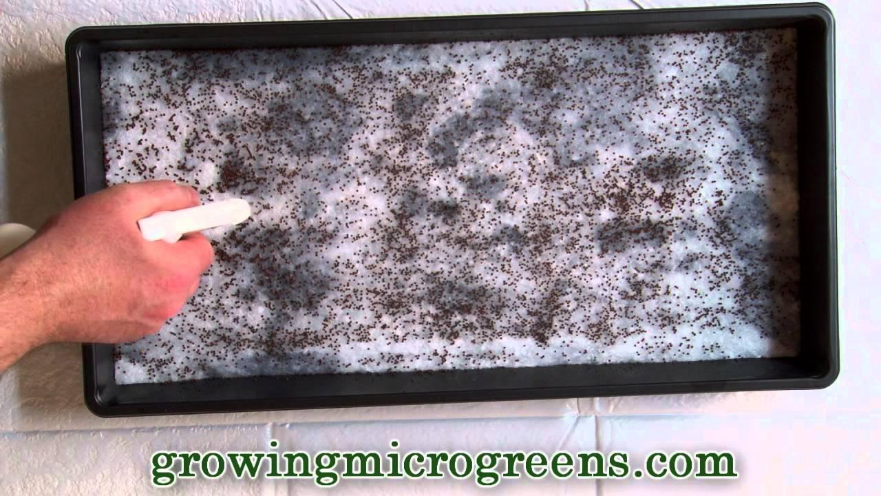 Growing Microgreens Hydroponic Method Part 1 Planting