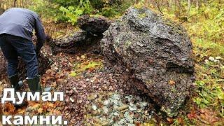 грибники нашли в лесу непонятную кучу.Думали это камни