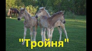 Тройня)))