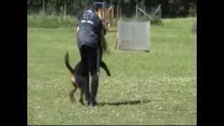 Rottweiler Incredible Rottweiler