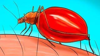 Apa yang Dialami Tubuh Anda Saat Digigit Nyamuk