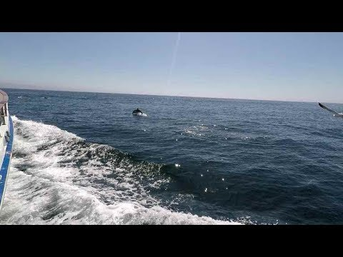 🎣 Family Fun- Deep Sea Fishing Newport Landing Sportfishing CA 🐟