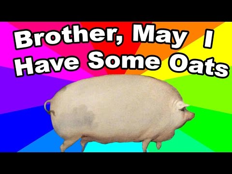 What is brother may I have some oats? The history and origin of the pig oats meme