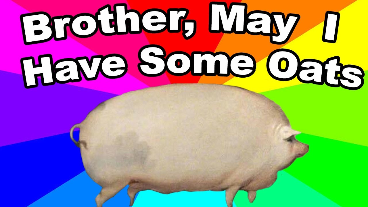 What is brother may I have some oats The history and origin of the pig oats meme