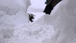 大雪の降った日、チワワのウルル君と楽しく遊びました。