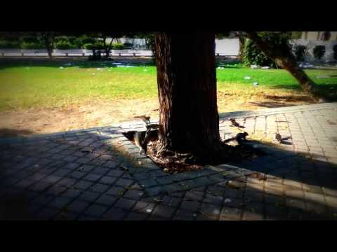 Frere Hall Karachi - Cute Squirrels playing in the garden