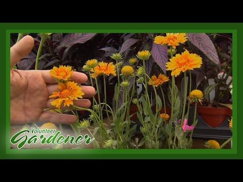 Drought Tolerant Plants | Volunteer Gardener