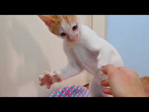 ✰HILARIOUS KITTEN✰ learns how to use the stairs! | Maui Boy