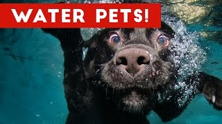 The Best Pet & Animal WATER FAILS & BLOOPERS of 2016 Weekly Compilation | Funny Pet Videos