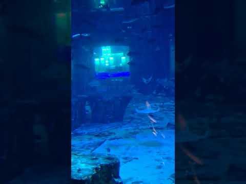 Atlantis Aquarium Dubai 2020