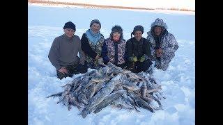 Как мы наловили 4 мешка ГОРБАЧЕЙ за полдня! Yakutia