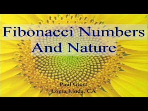 Fibonacci Numbers and Nature 11-25-2017 by Paul Giem
