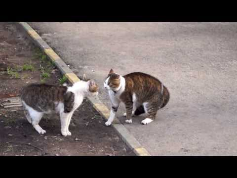 Коты орут!