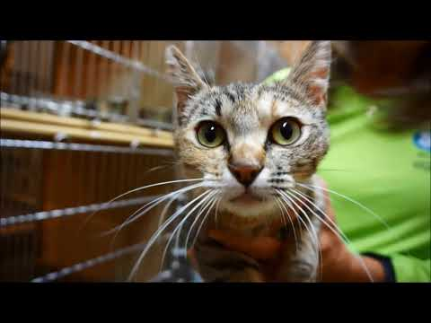 Become A PetSmart Volunteer With The SPCA Of Northern Nevada And Help Us Adopt Cats And Kittens!