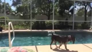 Lulu And Layla Swimming In The Pool