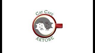 Видеоролик CAT CAFE