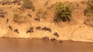 Cruce de ñus, río Mara