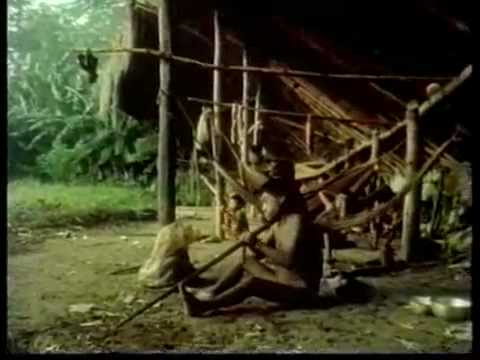 Populaire videos - Spirit Of The Rainforest