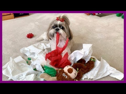 Lacy Jay Syler Santa Baby from YouTube · Duration:  2 minutes 55 seconds