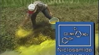 日本住血吸虫の今~フィリピン1996~制作:クリンメデイア株式会社 地方病 検索動画 30