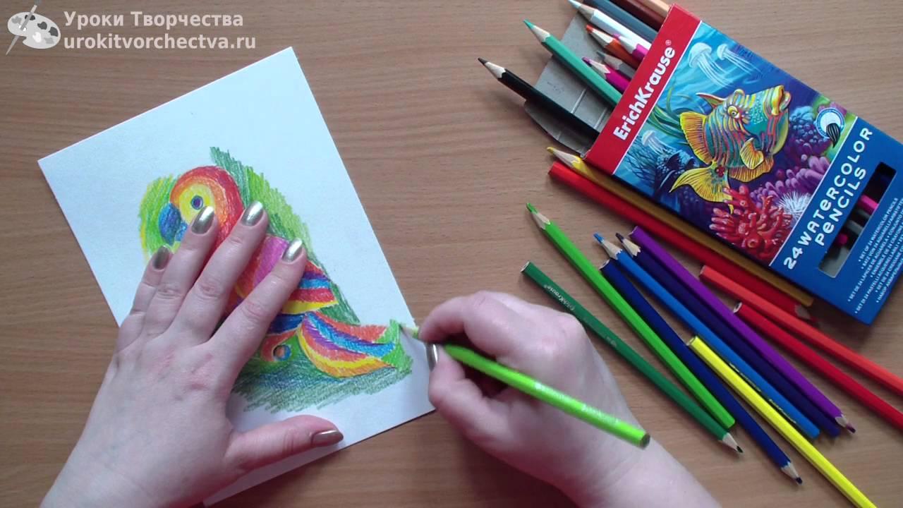 Набор цветных акварельных карандашей