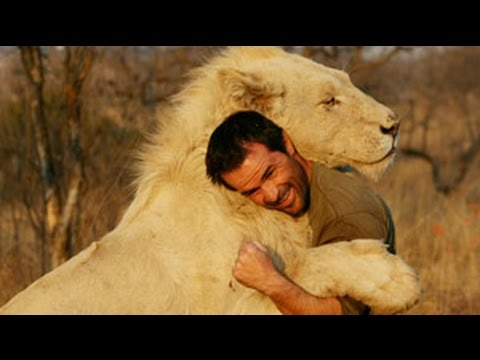 unbelievable friendship wild animals showing love to humans