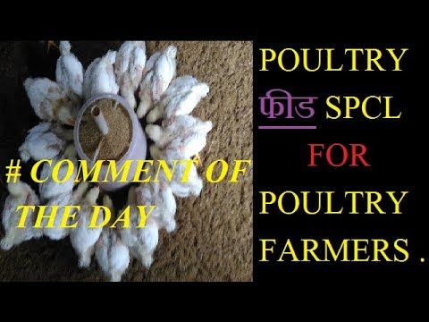 POULTRY FEED SPECIAL ! comment of day BY ABHISHEK SINGH