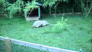 Turtles at York Maine Zoo