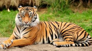 Интересные факты о животных - Топ удивительных фактов