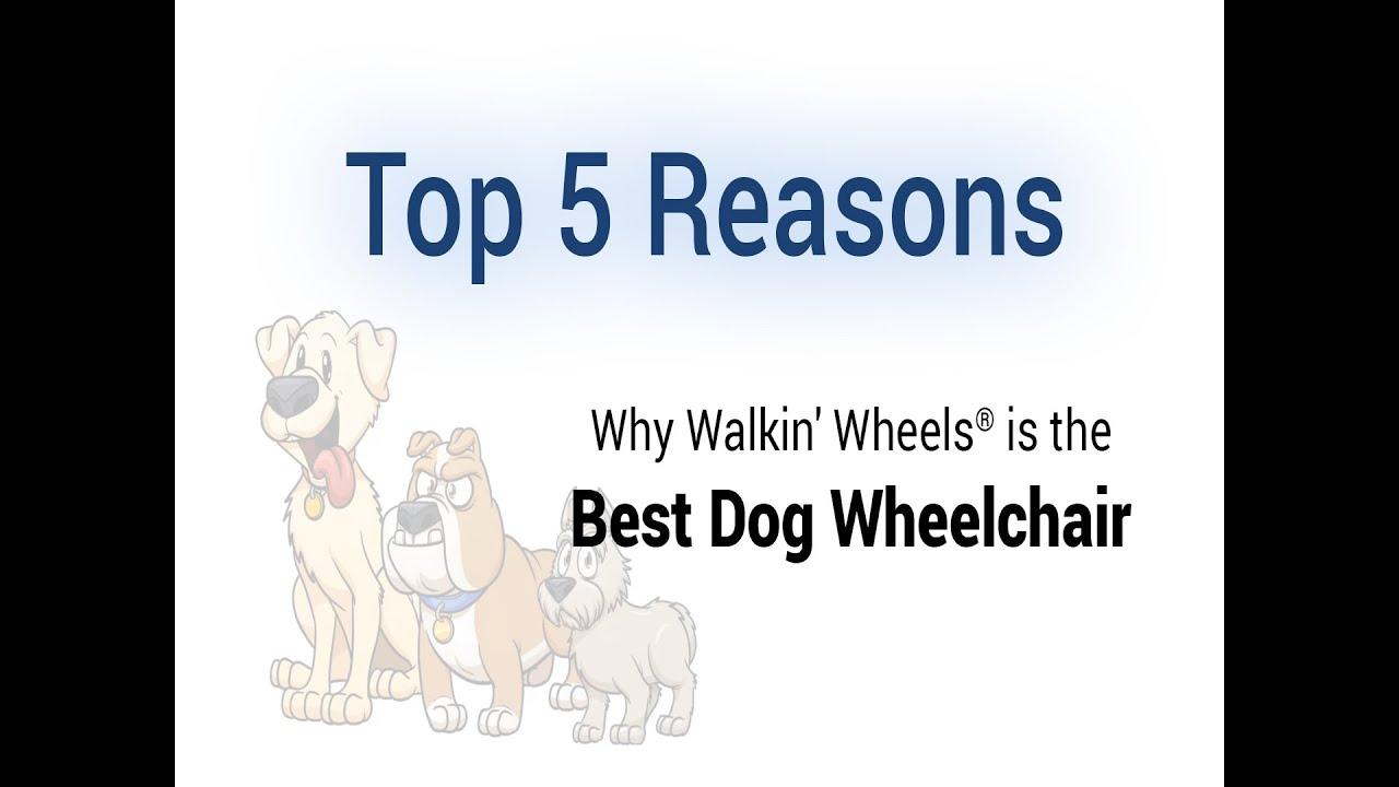 Walkin' Wheels   Dog Wheelchairs